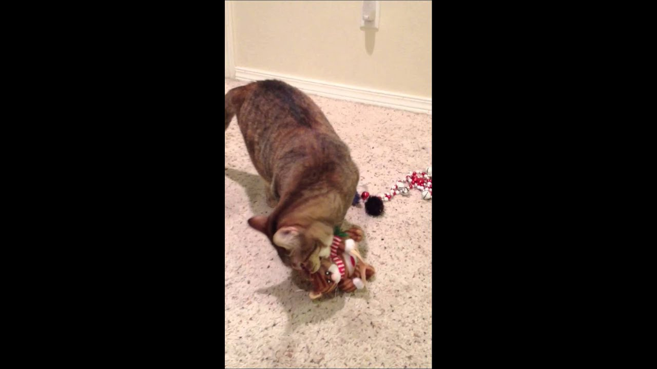 Cat attack Christmas toy - YouTube