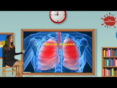 Органи дихання