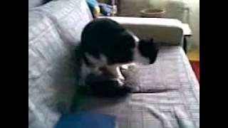 Кот и подушка 2.