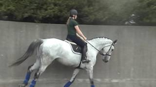 7 yrs old horse  1,55m all the scope in the world,