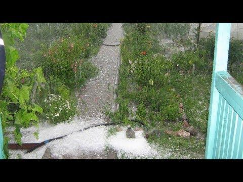 Грузия без урожая? Град в Аджарии уничтожил всё