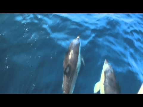 AllAbroad Sailing in Gibraltar - Roz kelly