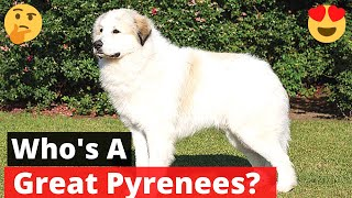 Great Pyrenees: All the Facts and Traits of this Wonderful Dog breed