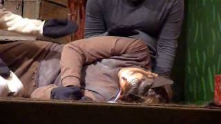 Animal Farm- Great Acting By Boxer The Horse