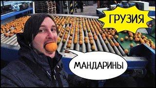 ГРУЗИЯ 🍊 ФАБРИКА МАНДАРИНОВ, Батумский Ботанический Сад 🌴 Вечерний Батуми! #4