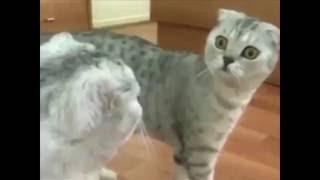 Лучший друг человека: Кот понимает хозяина лучше чем девушка
