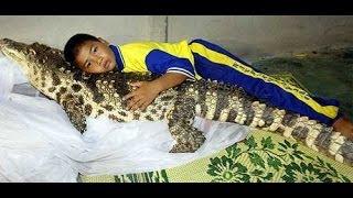Содержание крокодила в доме - Домашний крокодил