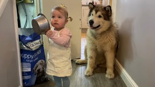 Baby Learns To Feed Dogs But Thinks It's A TikTok Diet Challenge!! (Cutest Video!!)
