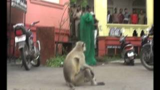 INDIA FUNNY MONKEY