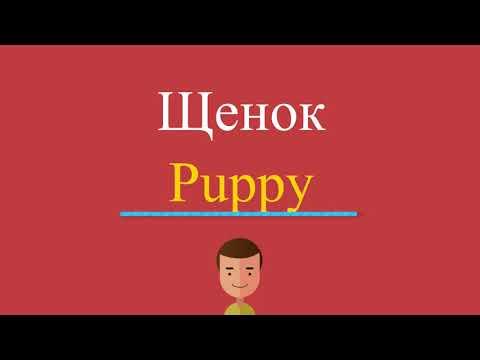 Как будет по английски щенок