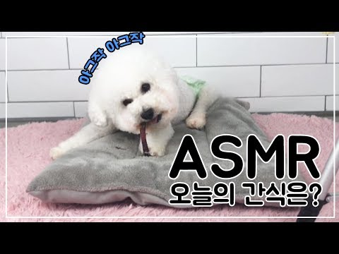 【TeN TV】 강아지 먹방 ASMR : 수제간식 캥거루 갈비뼈 / ASMR Dog( Bichon Frise )