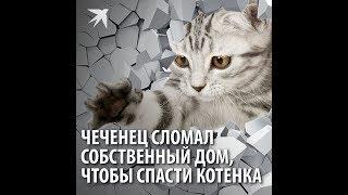 Чеченец сломал собственный дом, чтобы спасти котенка