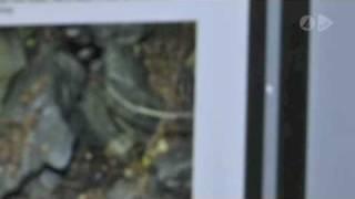 Bilderna på Elins sexmord släppta på nätet. 1/2 miljon har sett de ohyggliga bilderna.