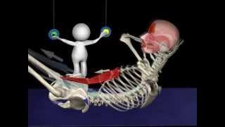видео Анатомия мышц пресса и упражнения для тренировки мышц живота