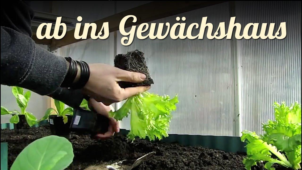 Fruhling Gewachshaus Bepflanzen Mit Jungpflanzen Garten Youtube