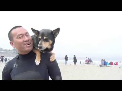 World Championship Dog Surfing Interviews - Pacific Coast TV