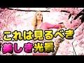 【海外の反応】日本の桜がアメリカに!ワシントンDCの「全米桜祭り」がすごい!