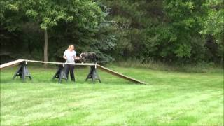 Thor (english Bulldog) Boot Camp Dog Training Video