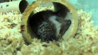 my hedgedog's houses