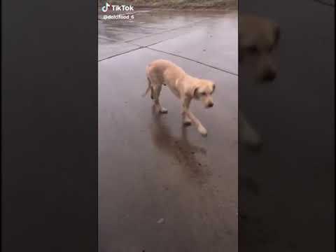 Dog Funny Dance
