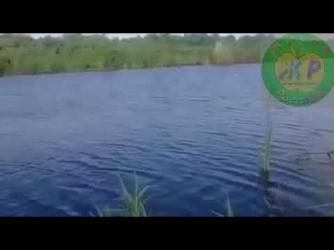 Ужас, как теперь купаться в Дону?