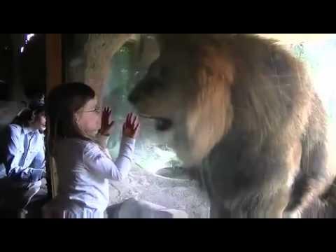 Con sư tử tìm cách ăn thịt em bé tại một sở thú thugian tso vn
