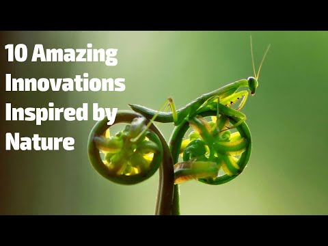 10 Amazing Innovations Inspired By Nature