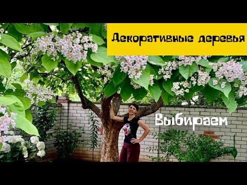 Декоративные деревья для дома своими руками