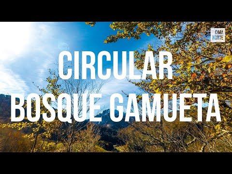 ruta-circular-al-bosque-de-gamueta---cima-norte,-guía-del-pirineo