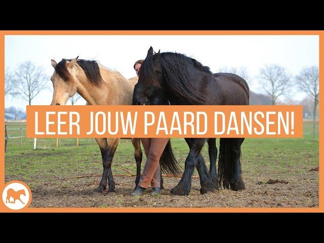 Leer jouw paard met jou dansen!