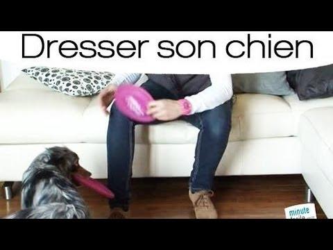 Apprendre a son chien a porter un objet - YouTube