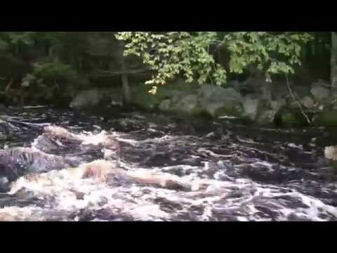 Canoeing To Seven Branches - Tusket River