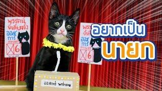 ออสการ์หาเสียง-6-นโยบายเพื่อมวลแมว