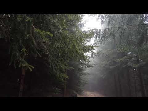 10 Hours of Rain Sound Relaxation / Ultimate Stress Relief, Deep Sleep, Meditation, Yoga,...
