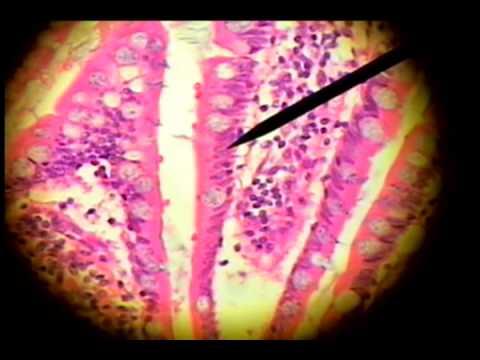 histology laboratory