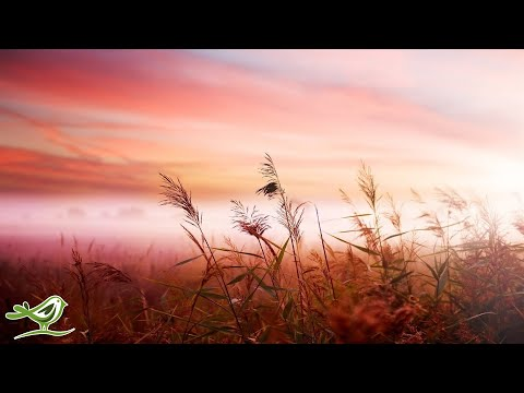 Download Youtube: Relaxing Piano Music: Sleep Music, Relaxing Music, Soft Sleeping Music, Fall Asleep ★129