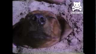 Boy buries his dog in the sand up to his neck