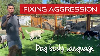Learn how to help dog on dog aggression with my simple method