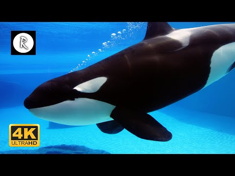10 Hours Of Sleep Music W/ Whales Sound & Thunder Sounds For Sleep, Relax, Insomnia, Spa
