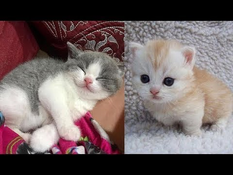♥Cute Cats and Kittens Doing Funny Things 2018♥ #1 - Funny Cat compilation