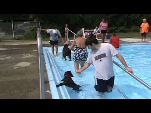 Dogs take over community swimming pool