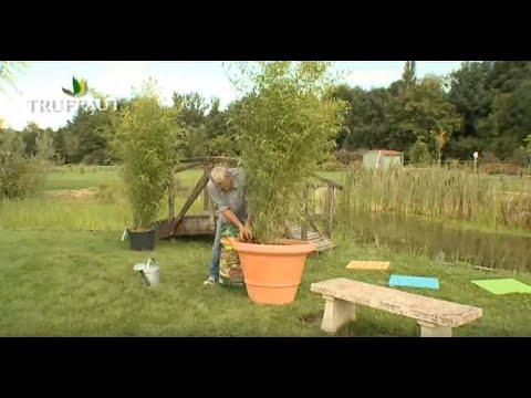 comment r 233 ussir la plantation du bambou en pot jardinerie truffaut tv