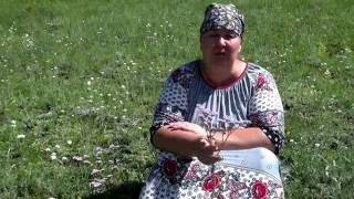 видео Кермек Гмелина Limonium gmelinii