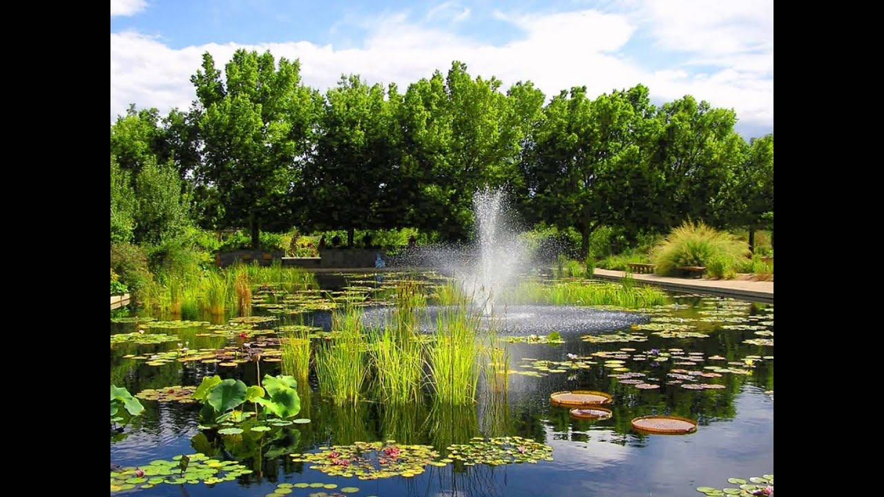the best view of botanical garden photo youtube