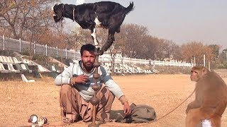 Bandar Aur Bakri Ka Khel - Funny Video | Comedy Video From My Phone