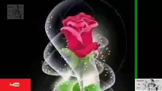 Arabian beautiful flowers - Hermosas flores de Arabia