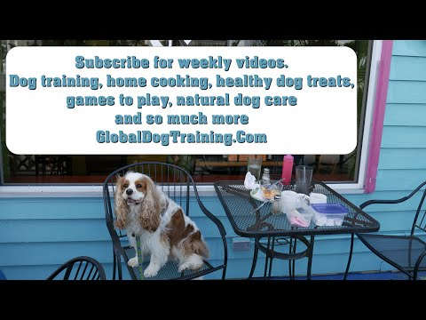 Weekly Dog Training, Holistic Health, Natural Dog Care Tips