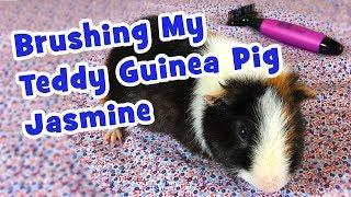 Brushing My Teddy Guinea Pig Jasmine