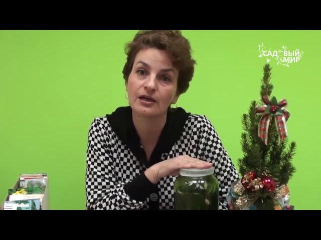 Как выращивать огурцы чтобы всегда быть с урожаем. Сайт