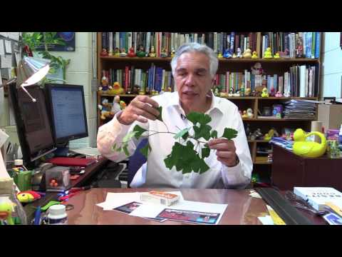 Dr. Joe Schwarcz: Memory aids and marketing scams